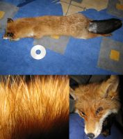 Foxie Collage by PoonieFox