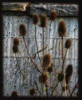 teasles by awjay