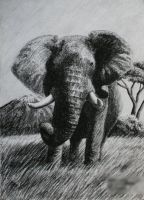 Tusker, charcoal by Panthera11
