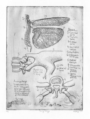 Fairy Wing Anatomy by Oddstuffs