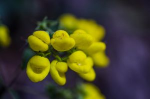Yellow little ones by LidiaRossana