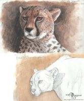 Cheetah sketches by makangeni