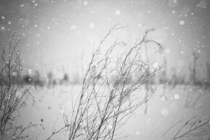 My winter II by Juliana-Mierzejewska