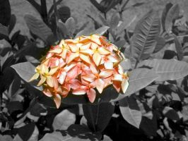 Flores 1 by cavenaghi9