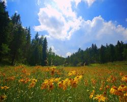 Sunny Coneflower Valley by greenunderground