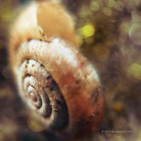 .: shell II :. by all17