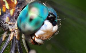 Blue Dasher Stack by Enkased