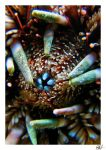 Under the sea III by new-wave-photos