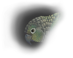 Turquoise Green cheeked Conure by Feyoka