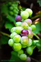 Waiting to Ripen by GlassHouse-1