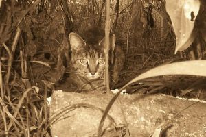 In the Bushes sepia tone by joyful-melody