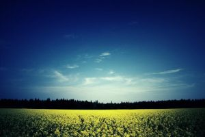 The golden field by Cubel