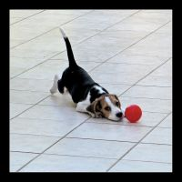 Play With Me. by RossoAlicante
