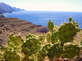 Opuntias on Gran Canaria by Paul774