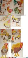 Rooster drawings by Worm-love