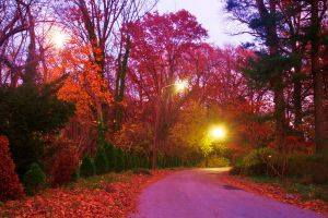 Autumn night by dolphintom