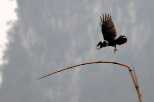 Bird and bamboo - Guilin by wildplaces