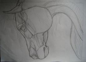 Horse sketch - Critique please by TransparentGhost