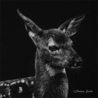 New Life - scratchboard by Misted-Dream