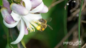 Bee And The Flower [SHOT 4] by pfgun0