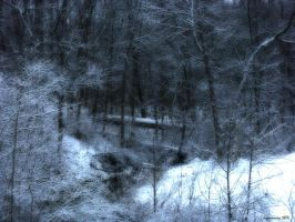 Missouri Woods in Snow by jojomercury