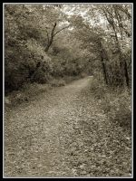 Trail by midgard