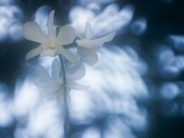 Faded Orchid by KBeezie