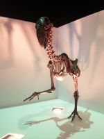 My time at the Houston museum part 8 by Joel-Cevallos