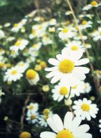 Flowers cheerful by xK1rax