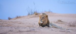 King of the dune... by MorkelErasmus