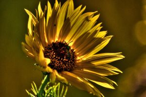 Yellow flower by Richard-Young