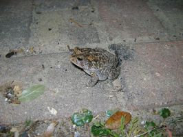 Toad on the Walkway by princesslillymono