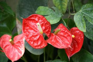 view to anthurium by ingeline-art