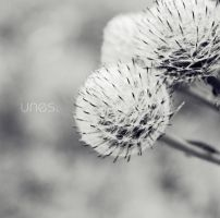F_0093 by unes