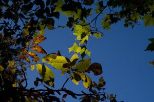 2014-10-22 Colors of the Day 11 by skydancer-stock