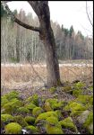 The very first green of spring... by Yancis