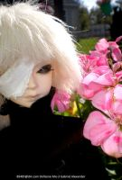 Gabriel  and pink flower 3 by MOGGGET