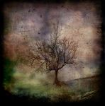 Tree by hearthy
