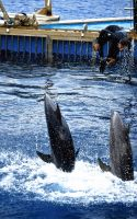 Dolphins at Oceanographic of Valencia [Spain] by MonLerma