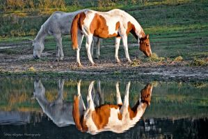 Horse Reflections by Allen59