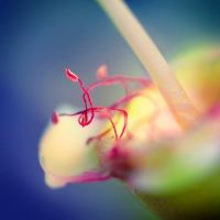 dance in macro by mohdfikree