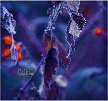 Winter 2012 by Callu