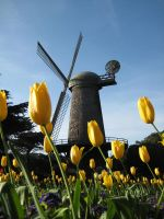 Windmill by anying
