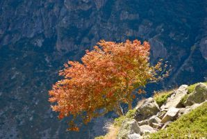 Oisans - Autumn tree by LLukeBE