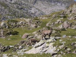 Some Ibex by FraterSINISTER