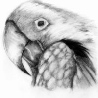Parrot by deathlouis