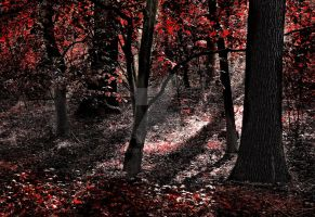 Trees ~ Red Autumn Forest 2 ~ STOCK by AStoKo by AStoKo