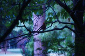 Lonely Cardinal by bewilderedconfused