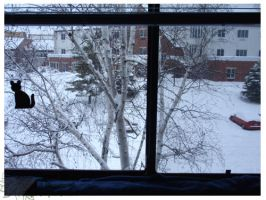 2010 5-6 02 Snow Pictures 06 by lilly-peacecraft