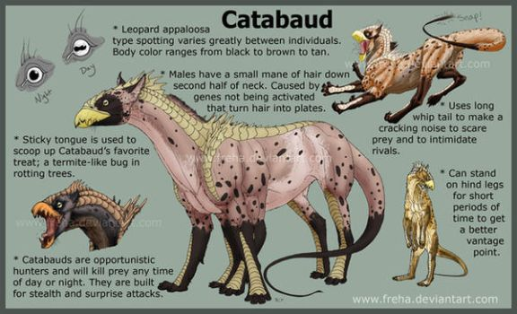 The Catabaud by Freha
